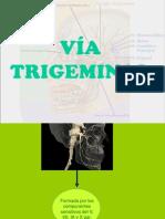 Vía Trigeminal