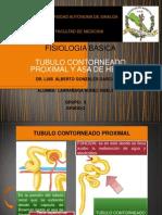 Tubulo Contorneado Proximal