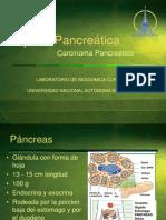 Lipasa Pancreática1
