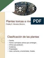 Plantas Toxicas a Nivel GI