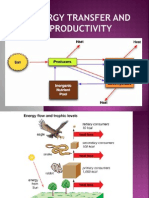 Energy Transfer and Productivity