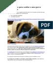 Cinco pasos para cuidar a una perra esterilizada.docx
