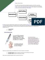 Conceptos básicos sobre el sistema inmunitario.pdf
