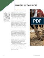 Siembra y cosecha de los Incas