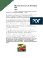 Guia Completo Para Produção de Morangos Em Hidroponia