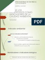 expo-bichitos.pptx