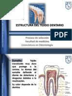 t3 Tejido Dentario Prs