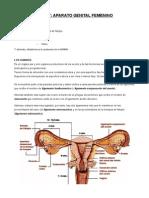 Tema 7, Aparato Reproductor Femenino
