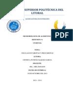 Resumen Celulas Ecuariotas y Procariotas