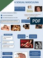 Respuesta Sexual Masculina