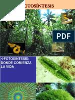 Clase 08 - Fotosintesis