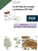 Bioquimica 4 -Reyna
