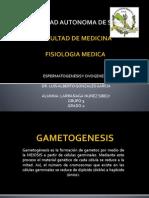 Espermatogenesis y Ovogenesis