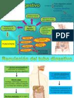 Sistema Digestivo Introducción