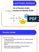 Nucleotides_nucleic Acids and Protein Synthesis_2014
