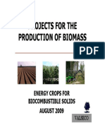 Pawlonia Biomasa En