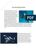 Cook Inlet Beluga Whale-Final
