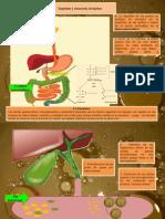 Digestion de Lipidos