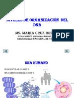 Organizacion Del Adn