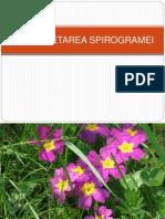 interpretarea spirogramei
