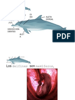 Los Delfines Son