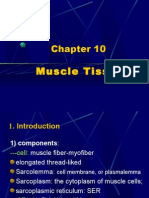 muscle tissue-wl06.11