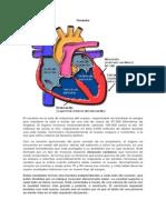 Corazón y Bulbopatia