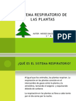 Sistema Respiratorio de Las Plantas