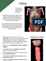 Anatomia TORAX 1