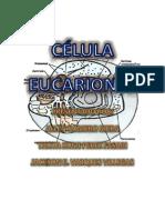 eucarionta 6