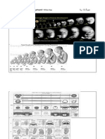Fetal growth & development.docx