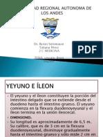 YEYUNO-3
