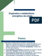 Capítulo 9 Organelas e Metabolismo Energético Da Célula