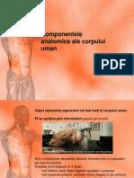 1 Componentele Anatomice Ale Corpului Uman (1)
