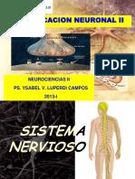 3. Power Point - Sistema Nervioso