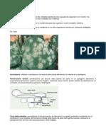 Glossario Della Patologia Vegetale