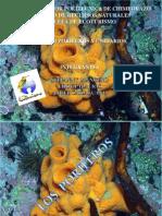Poriferos y Cnidarios