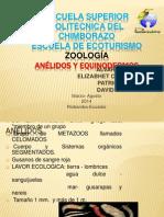 Anelidos y Equinodermos