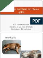 Neoplasias mamárias em cães e gatos