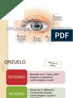 Parpados Patologias Estructura