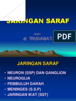 1. Saraf
