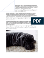 Perros mastines.pdf