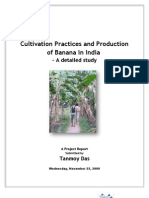 Project Report on Banana
