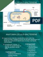 2.3.Anatomia Bact. Multiplicare