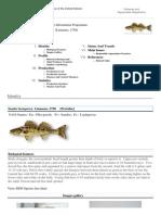 FAO Fisheries & Aquaculture - Cultured Aquatic Species Information Programme - Sander Lucioperca (Linnaeus, 1758)