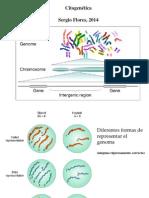 Clase 15 Citogenetica Humana 2014