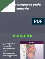 File1-Sistem Respirasi Ppt