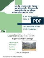 """""""Efecto de La Interacción Hongo – Dodonaea Viscosa L. Jacq en La Fitorremediación de Plomo en Un Sistema in Vitro"""