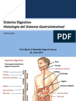 Histología digestiva