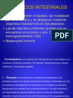 Copia de Protozoos Intestinales